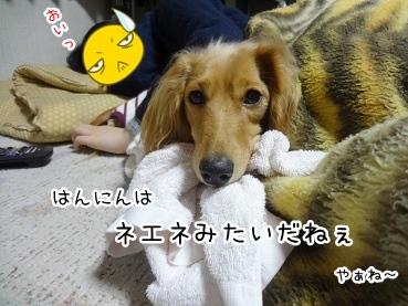 kinako1886.jpg