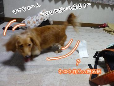 kinako1897.jpg