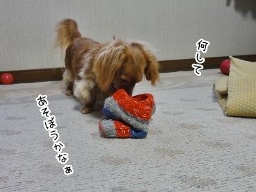 kinako1913.jpg