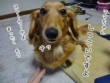 kinako1983.jpg