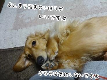 kinako2023.jpg