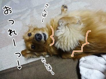 kinako2025.jpg