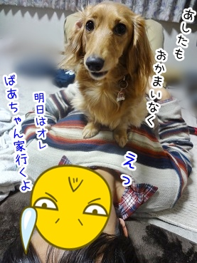 kinako2035.jpg
