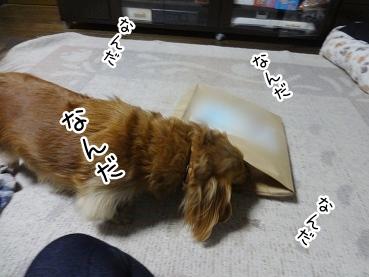 kinako2053.jpg