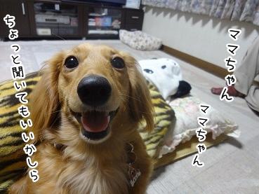 kinako2062.jpg