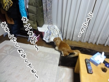kinako2074.jpg