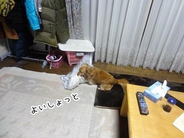 kinako2075.jpg