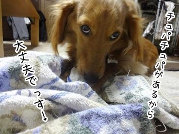 kinako2078.jpg