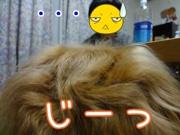 kinako2086.jpg