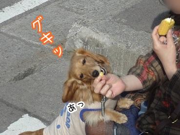 kinako2108.jpg