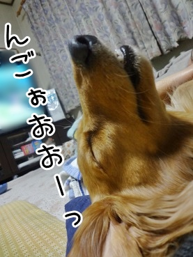 kinako2117.jpg