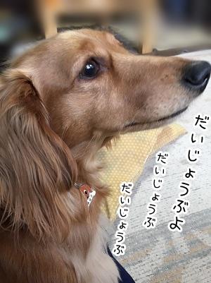 kinako2124.jpg