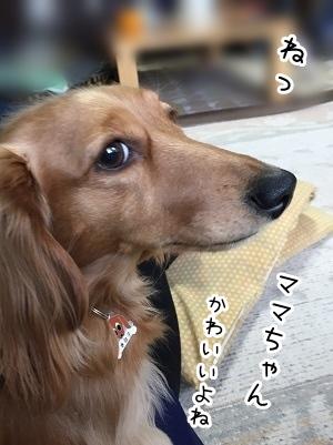 kinako2125.jpg
