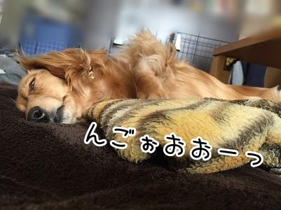 kinako2132.jpg