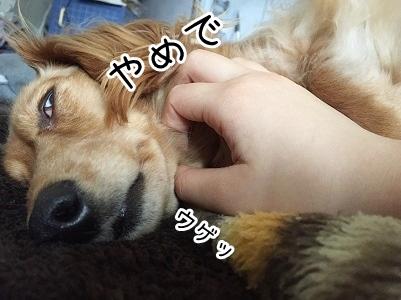 kinako2133.jpg