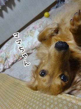 kinako2134.jpg