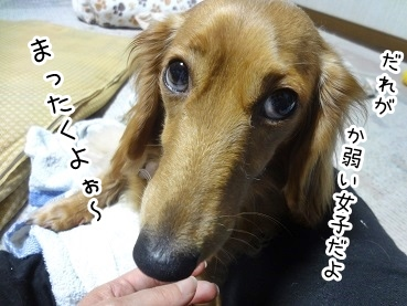 kinako2138.jpg