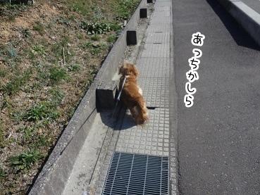 kinako2140.jpg