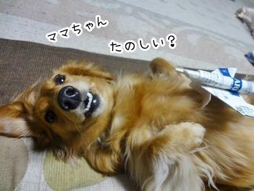 kinako2149.jpg