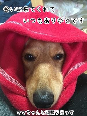 kinako2163.jpg