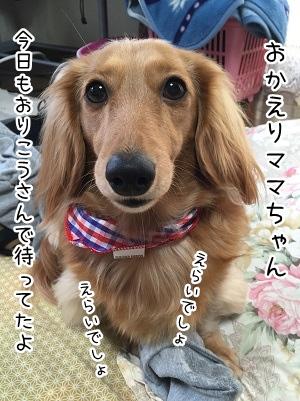 kinako2164.jpg