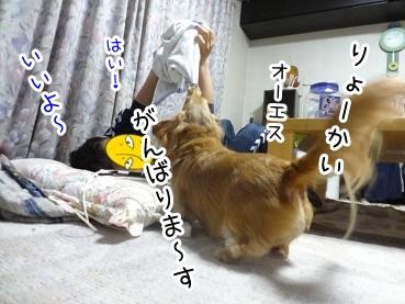 kinako2170.jpg
