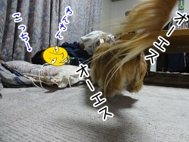 kinako2172.jpg
