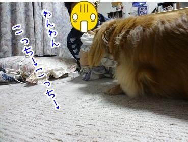 kinako2175.jpg