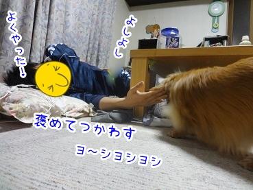 kinako2177.jpg