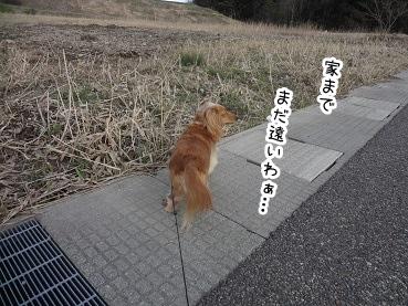 kinako2183.jpg