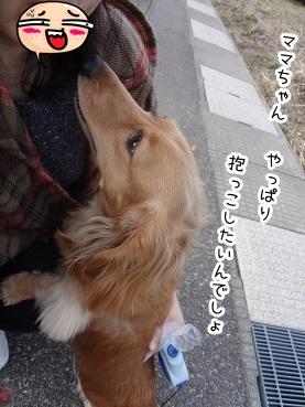 kinako2186.jpg