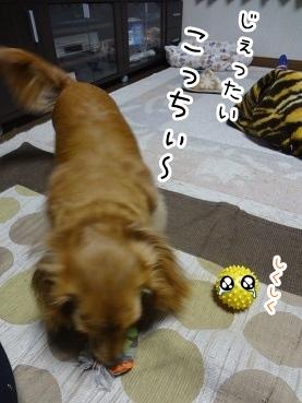 kinako2206.jpg