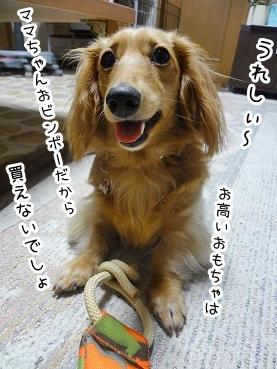 kinako2207.jpg