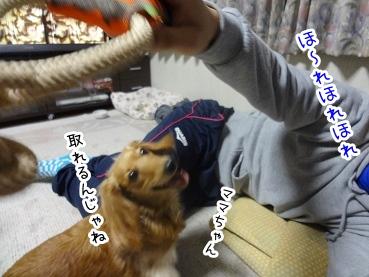 kinako2215.jpg