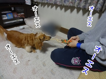 kinako2218.jpg