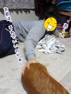 kinako2219.jpg