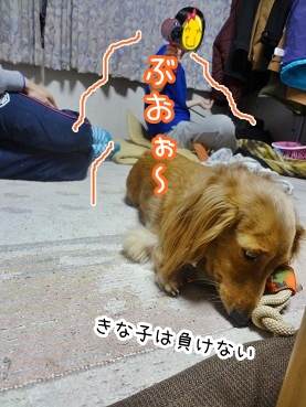 kinako2222.jpg