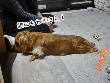 kinako2225.jpg