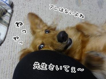 kinako2229.jpg