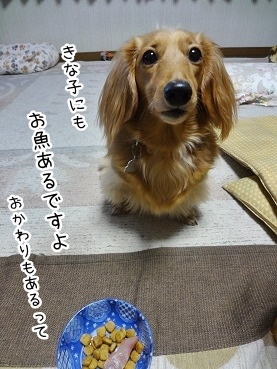 kinako2234.jpg