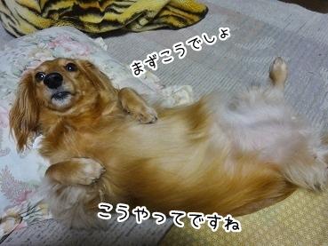 kinako2236.jpg