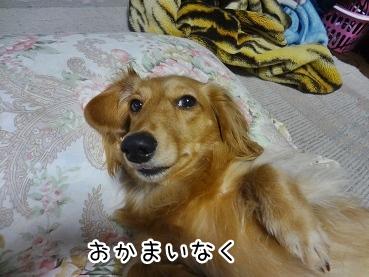 kinako2237.jpg