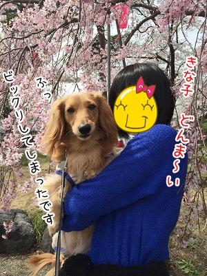 kinako2264.jpg