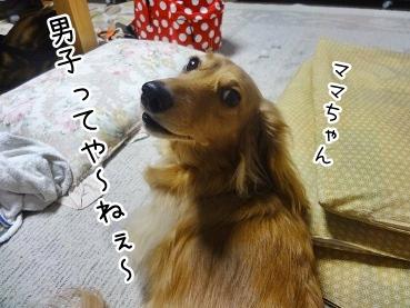 kinako2281.jpg