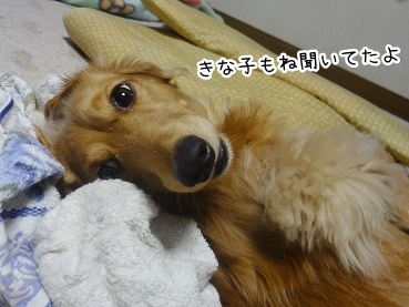 kinako2283.jpg