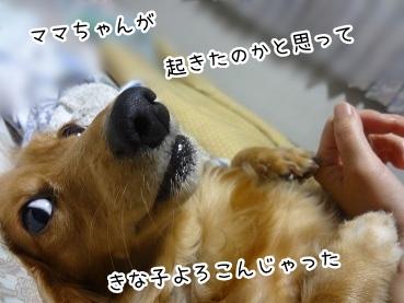 kinako2284.jpg