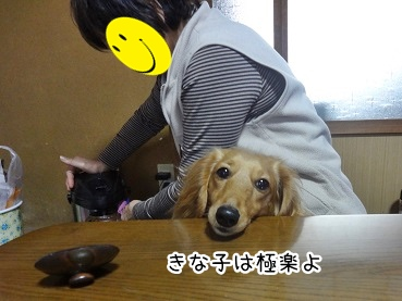 kinako2294.jpg