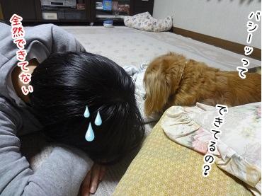 kinako2307.jpg
