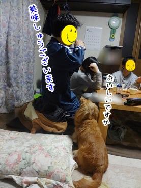 kinako2317.jpg