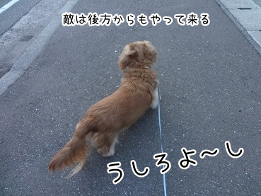 kinako2326.jpg